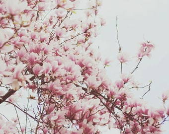 Nature Photography - Spring Blossoms Pink Cherry Tree Photo Nature Print Abstract Nature Fine Art Botanical Pale Neutral Decor Soft Spring