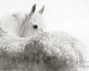 Gray Horse Looking Over Shoulder,Black and White Horse Photography, Fine Art Horse Photography, Horse Print, Horse Picture, Horse Poster,