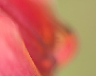 Modern abstract flower photograph - Tulip Abstract 4 - 11x14 colorful fine art print - home decor gift