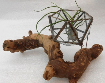 Airplant Glass Terrarium - Geometric (with wood base): An Icosahedron (20 triangular faces) - suspended above a rustic wood base