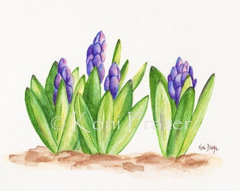 Hyacinth flowers, bright and fun spring flowers