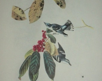 Audubon's Birds of America, Bookplate, 1950, First Edition Book Page Print, 246 Cerulean Warbler/245 Yellow Warbler