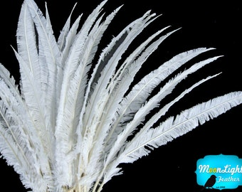 Ostrich Feathers, 1/2 lb  - WHITE OSTRICH NANDU Trimmed Long Wholesale Feathers (bulk) : 3326