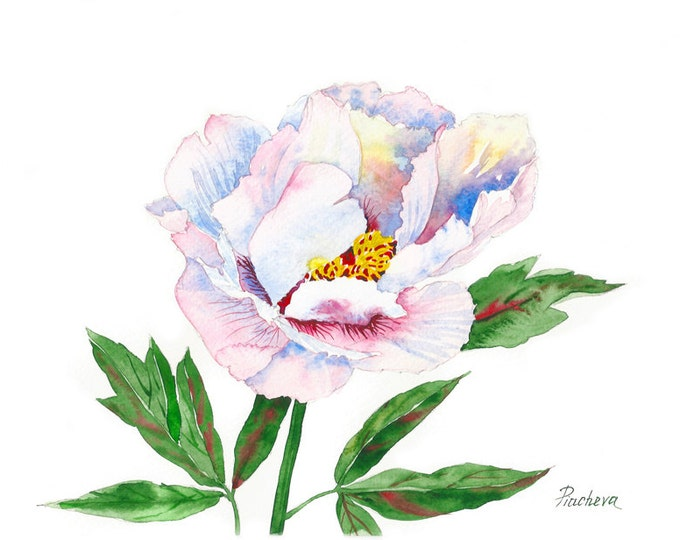 Peony. White and pink, Watercolor Original, flower, floral, art, spring, botanical, bouquet, gift for her, watercolor,
