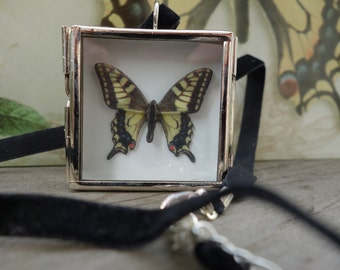 Anise Swallowtail butterfly necklace - silver shadowbox pendant - insect butterfly collection display case - yellow black and silver - Vegan