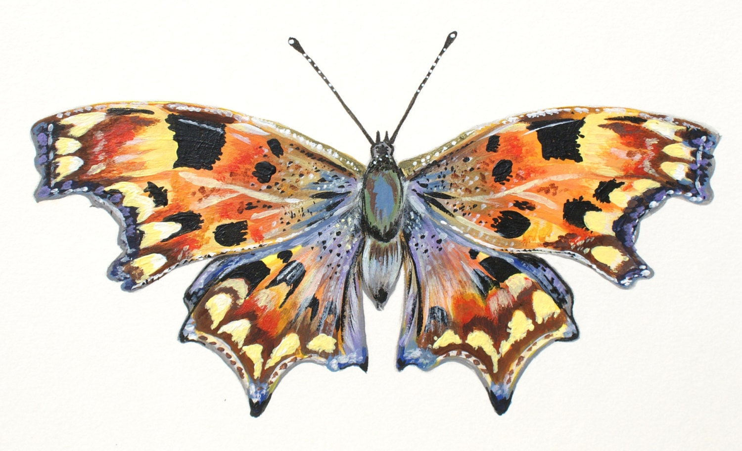 Comma Butterfly Acrylic painting by WelshPoppy on Etsy