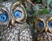 two little owls with stunning   bright blue eyes  seeking refuge in your home