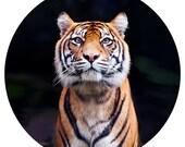 Kids Decor, Modern Wall Decor, Minimal, Symmetry, Decal, Sumatran Tiger Conservation, Orange, Black, Stripe - Gaze