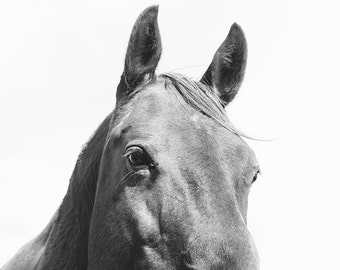 Monochromatic Horse Home Decor, Black and White Equestrian Photograph
