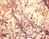 cherry blossom tree photograph, pink girls room print, baby nursery art, spring home decor, nature photography, photo, sunshine, 20x20 8x8