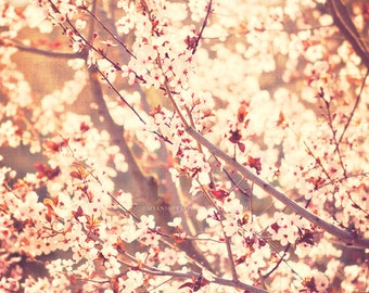 cherry blossom tree photograph, pink girls room print, baby nursery art, spring home decor, nature photography, photo, sunshine, 20x20 8x8