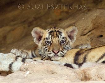 Baby Animal Photography, Cute Baby Tiger Photo Print, Wildlife Photograph, Baby Nursery Decor, Safari Nursery Art, Tiger Cub, Kids Room, Cat