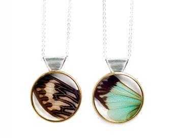 Cicada Wing Necklace