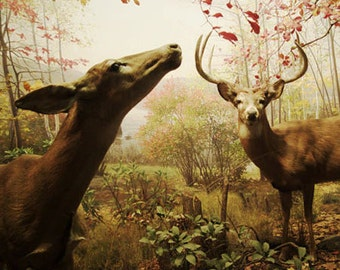 Animal art, deer photograph, deer wall art, deer wall decor, large wall art, deer print, nursery wall art