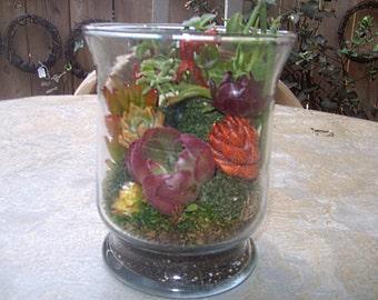 Under Glass Living Growing Succulent Plants Terrarium