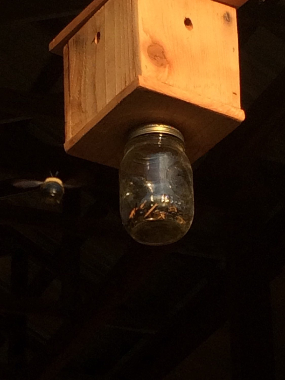Carpenter Bee Trap Bee Traps Mason Jar Cedar Bee By