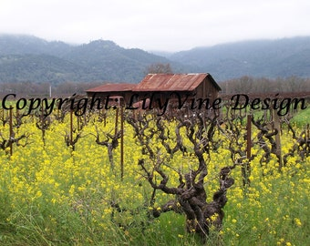 Rustic Shed in the Mustard Flowers