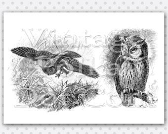Owls Clip Art Vintage Graphics Clipart Nature Owl Victorian Printable Digital Collage Sheet Instant Download Scrapbooking