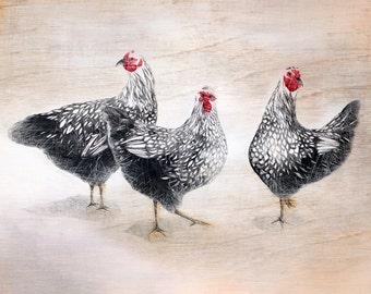 12 Days: Three French Hens Print