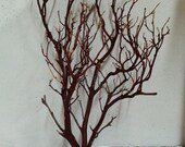 Manzanita Branches Natural Red 24 Inches
