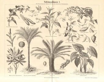 1890 Domesticated Plants, Nagaimo, Arrowroot, Tuberous Pea, Sweet Potato, Cassava, Sago Palm, Sago Cycad, Taro Antique Engraving
