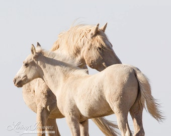 Windswept: Cloud and Encore - Fine Art Wild Horse Photography - Wild Horse - Cloud - Fine Art Print