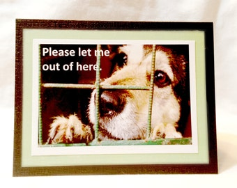 Please let me out of here... Sad Shelter Dog  Set of 2  Greeting Cards