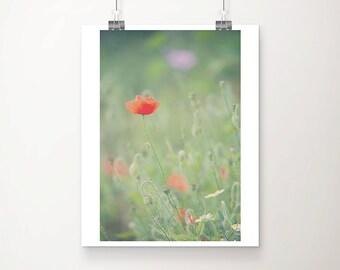 red poppy photograph red poppy print english garden photograph nature photography summer photograph red poppy art
