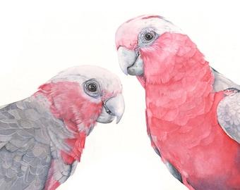 Galah print of watercolor painting G2315- 5 by 7 size print. bird art, wall art, home decor