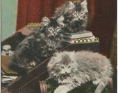 Junior Clerks Kittens in Finance Office Vintage Postcard Undivided Back