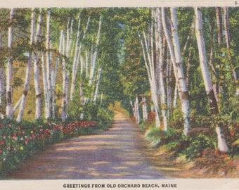 Old Orchard Beach, Maine - Linen Postcard - Unused (ZZ)