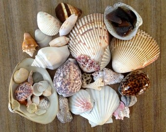 Vintage Shell Collection - Vintage Home Decor - Vintage Sea Glass and Coral - Nature Curiosity Display