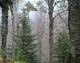 Tranquility - Bear Heaven, West Virginia