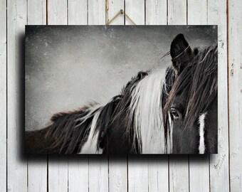 Up Close - Horse photography - Horse art - Horse decor - Horse canvas decor - Animal photography