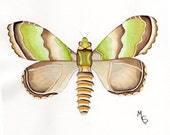 Print From Watercolor Painting Green Autumn Moth. Entomology Specimen illustration Insect Wall Art Natural History Butterfly Moths