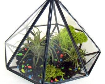 Air Plant Terrarium Diamond Shaped Glass Terrarium with Air Plants