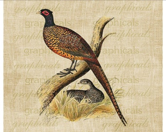 Pheasant and mate Instant Digital download image for iron on image fabric transfer burlap decoupage paper tote bags pillows No. 2209
