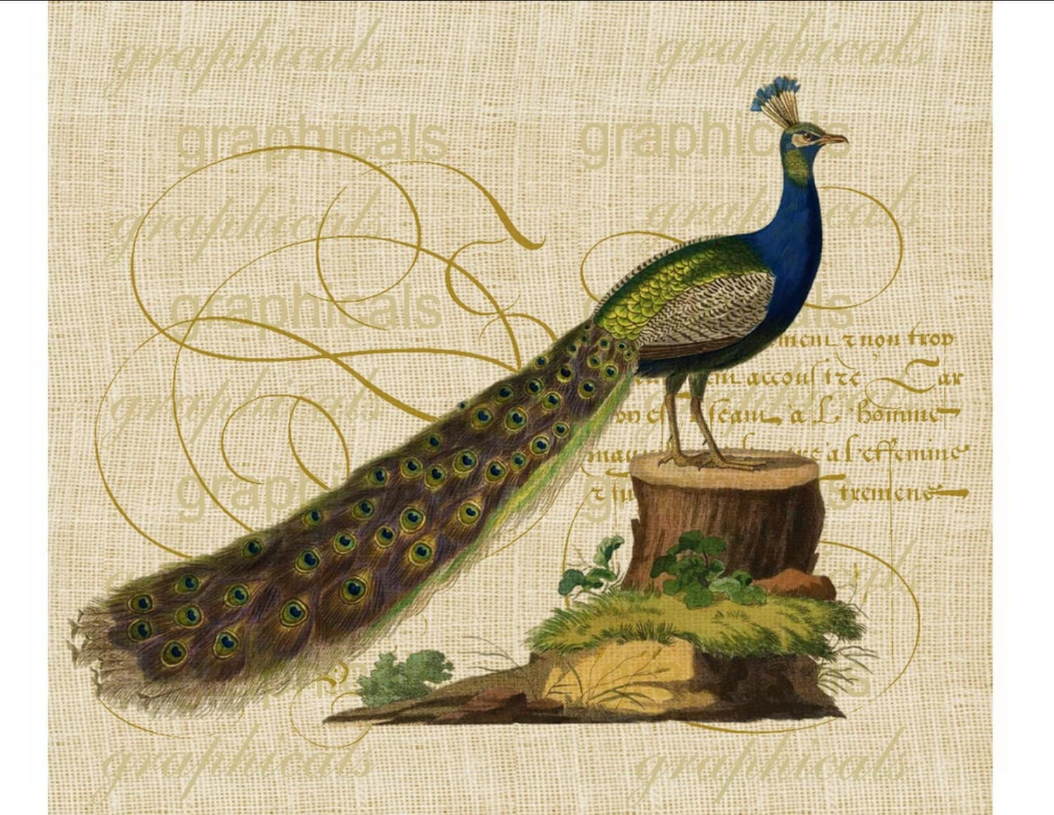 Peacock Bird Antique Calligraphy Instant Digital By Graphicals