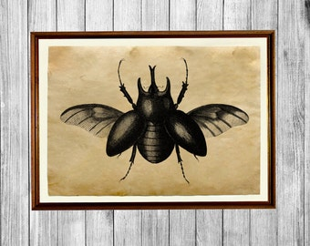 Bug poster Insect decor Beetles print Antique art AK399