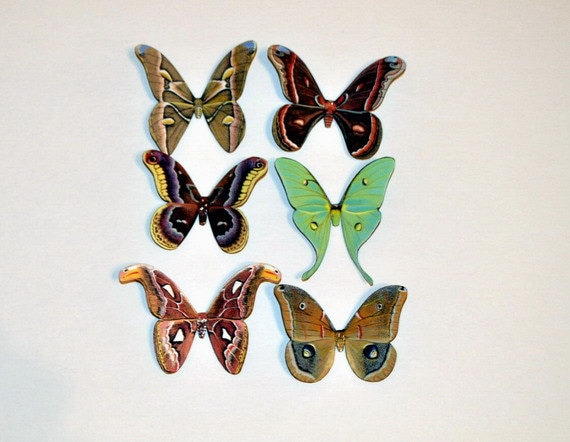 Butterfly Moth Magnets Wholesale Lot of 6 by  Doug Walpus
