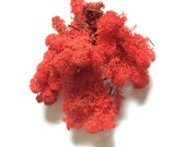 Reindeer Moss Red 3 OZ Bag Medium Bag
