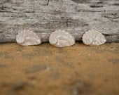 Beach Decor Seashells Abalone Shells - 10 Sea shells - Craft Sea Shells - Beach Wedding Decorations