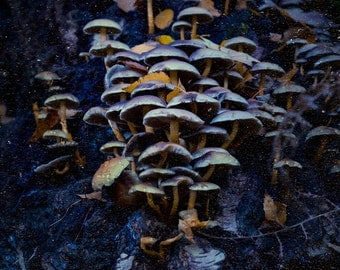 Mushrooms Forest Photography, Surreal, Photo, Fairy Tale Wall Art, Woods, Earth, Dark, Magical, Woodland Home Decor, Toadstool, Fairy Town