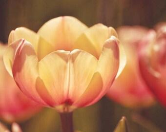 Cream Pink spring photograph, floral wall decor, cream spring art, cream bathroom decor, botanical spring, botanical art
