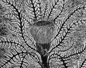 Banksia limited edition hand pulled woodcut print