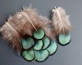 Lady Amherst Pheasant shoulder feathers, Earring, Jewelry, Craft