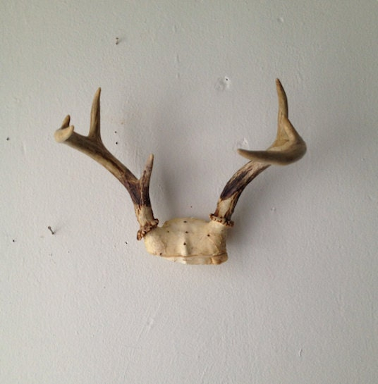 RESERVED FOR MONICA Vintage Hanging Antler Mount Hanging Wall