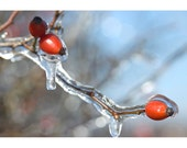 Frozen Berries Photograph