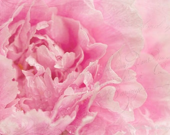 Peony 6, Fine Art Photography, Flower Photography, Floral Photography, Nature Photography