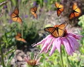 Poster Butterfly Photo Dance Abstract Print Nature Poster 11.25x17, 18x24, 24x36